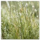 Sparkling Grasses Plakater af Günter Lenz