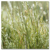 Sparkling Grasses Kunst