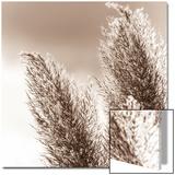 Tender Grasses - Reprodüksiyon