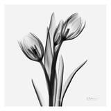 Tulpen Print van Albert Koetsier