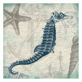 Seahorse Posters by Jace Grey