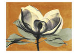 Warm Magnolia 1 Prints by Albert Koetsier