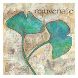 Gingko Rejuvenate Poster by Beverly Dyer