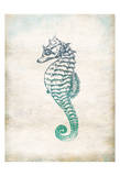 Seahorse Prints by Jace Grey