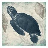 Turtle Schilderij van Jace Grey