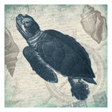 Turtle Posters by Jace Grey