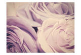 Purple Vintage Roses Print by Ashley Davis