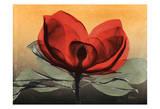 Hot Magnolia 1 Prints by Albert Koetsier