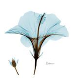 Hibiscus Wave Poster von Albert Koetsier