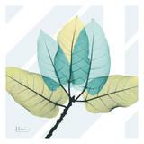 Transitional Ficus Burkey Posters by Albert Koetsier
