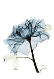 Teal Rose 2 Print by Albert Koetsier