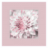 Dahlia Pinks 5 Prints by Suzanne Foschino