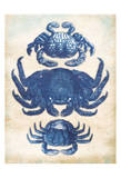 3 Crabs Poster by Jace Grey