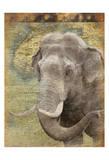 Elephant 2 Prints by Jace Grey