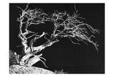 Bodi Tree Print by Albert Koetsier