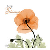 Keep Shining Iceland Poppy Prints by Albert Koetsier