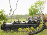 Side View of Tourists in Jeep Looking at Cheetah Lying on Log Prints by  Nosnibor137
