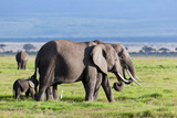 Elephants Herd on African Savanna. Safari in Amboseli, Kenya, Africa Poster by PHOTOCREO Michal Bednarek