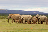 Elephant Herd Photographic Print by  ZambeziShark