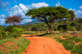 Red Ground Road and Bush with Savanna Landscape in Africa. Tsavo West, Kenya. Photo by PHOTOCREO Michal Bednarek