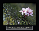 Cherry Blossom Determination Posters by Erin Berzel