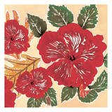 Hibiscus Poster by Anne Ormsby
