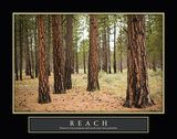 Forest Reach Prints by Erin Berzel