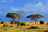 Savanna Landscape and its Flora in Africa, Amboseli, Kenya Posters by PHOTOCREO Michal Bednarek