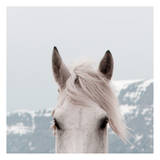 Mountain Mare Poster by Carol Walker