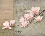 Magnolias Posters by Lynnea Washburn