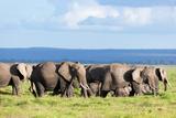 Elephants Herd on African Savanna. Safari in Amboseli, Kenya, Africa Posters by PHOTOCREO Michal Bednarek