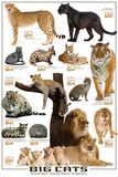 Big Cats Posters