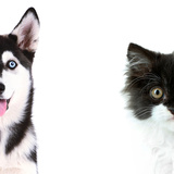 Cute Cat and Dog Faces Isolated on White Photographic Print by  Yastremska