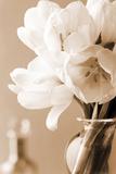 Tulips in Sepia Print