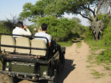 Rear View of a Group of Tourists in Jeep Looking at Elephant Posters by  Nosnibor137