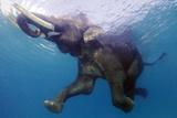 Elephant Underwater Prints