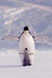 Penguin & Chick Plakaty
