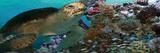 Sea Turtle Billeder
