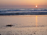 Morro Bay Pacific Beach Sunset Photographic Print by Anna Miller