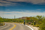 Road in Saguaro National Park, Arizona,USA Photographic Print by Anna Miller