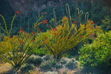Arizona Desert Plants Photographic Print by Anna Miller
