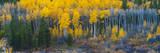 Autumn Vista with Yellow Aspens Along Cottonwood Pass, Rocky Mountains, Colorado,USA Photographic Print by Anna Miller