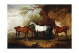 Three Hunters Belonging to Robert Myddelton-Biddulph Giclee Print by John E. Ferneley