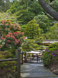 Japanese Tea Garden, Golden Gate Park, San Francisco Photographic Print by Anna Miller