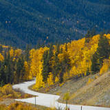 Fall Color of Aspen Trees and Evergreens Along Cottonwood Pass of Rocky Mountain National Park Photographic Print by Anna Miller