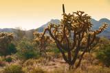 Arizona Desert Cactus Photographic Print by Anna Miller