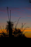After Sunset in Saguaro National Park Photographic Print by Anna Miller