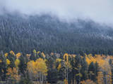 Frosty Evergreens and Aspens on a Foggy Hill in Rocky Mountains, Colorado Photographic Print by Anna Miller