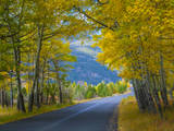 Road Thru Autumn Aspen Grove, Rocky Mountain National Park, Colorado,USA Photographic Print by Anna Miller