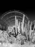 Phoenix Botanical Gardens, Arizona,USA Photographic Print by Anna Miller